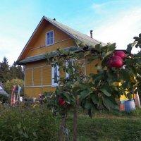 Хорошо иметь домик в деревне! :: Виктор Елисеев