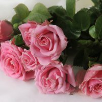Розовые розы :: Галина Galyazlatotsvet