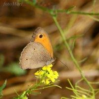 Бабочка. :: Марина Соколова