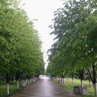 Аллея после дождя :: Иришка Бекетова