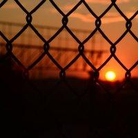 Солнце в клетке :: Екатерина Марфута