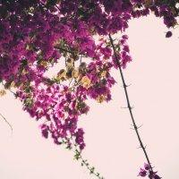 Цветы :: Анна Раневская