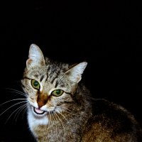 Кошка :: nezna_komec Жилин