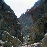 В ущелье Копет-Дага :: Ахмед Овезмухаммедов