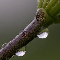 Капли дождя :: Валерий Шибаев
