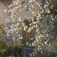 Весенний цвет :: Оксана Таран