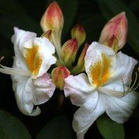Из жизни цветов :: Nikolay Monahov
