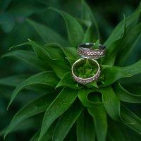 Wedding rings :: Julia Jeider