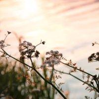 Вода-трава :: Варвара Фроловская