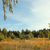 Поляна в лесу :: Лидия (naum.lidiya)