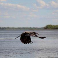 Полёт над Волгой с куриной косточкой :: Dr. Olver