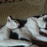 братья ❤ :: кот ❤