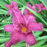 Лето,утро,дождь... :: Тамара (st.tamara)