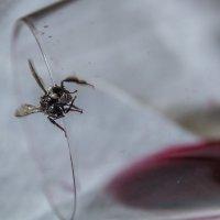 Драма. Пчела в стакане. :: Olga Udo
