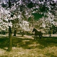 Инфракрасная лошадка :: Alexander Varykhanov