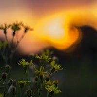 цветы на фоне :: Геннадий Свистов