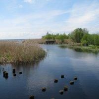 Река впадает в озеро. :: Галина .