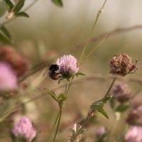 Замершие цветы :: Владимир Марков