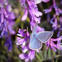 бабочка :: Кристина Рубанова