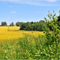 Пшеничное поле :: Андрей Куприянов