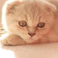 Кошка :: Лариса Романушкина