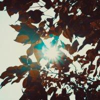 Листочки :: Света Кондрашова