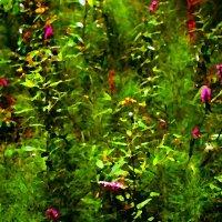Солнечнолетнее в лесу :: mikkoru(Михаил Козлов)
