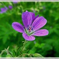 Что есть цветы, трава по сути, но как красой ласкают взгляд... :: Любовь Чунарёва