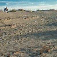 в песках :: Litana *