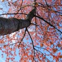 звенит листва в осеннем небе... :: Надежда