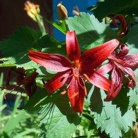 Таинственен,красив цветочный мир :: Domna Kuznechic