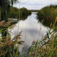 Осень у воды... :: Тамара (st.tamara)
