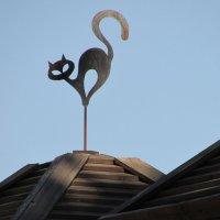 Кот на крыше :: Marina Timoveewa