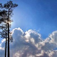 Небес земная ностальгия... :: Лесо-Вед (Баранов)