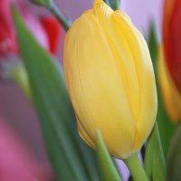 цветы :: Ольга Пахомова