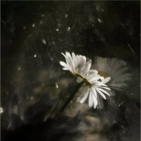 Мечтая о солнце... :: Алена Афанасьева