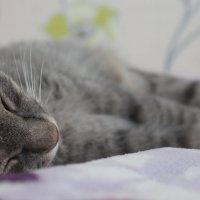 сладкий сон :: Яна Осянина