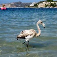 фламинго на пляже :: Татьяна Осипова(Deni2048)