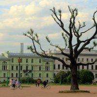 деревце в Питере :: Tasha