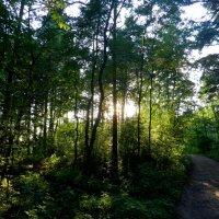 По лесным дорожкам... :: Valentina Altunina