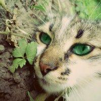 Кот. :: Христя Мельниченко