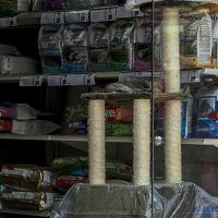В зоомагазине-витрина3х2-из серии кошки очарование моё! :: Shmual Hava Retro