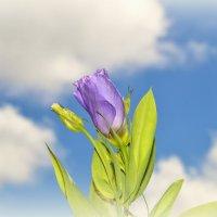 Небесный цветок :: Геннадий Храмцов