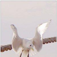Крылья... :: Кай-8 (Ярослав) Забелин