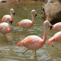 Фламинго :: Олег Будников