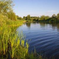 Заброшенный барский пруд :: Сергей С.