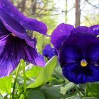 Цветы :: Татьяна Ларионова