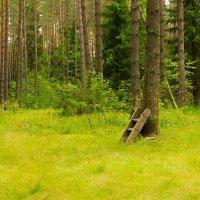 Портал в лесу :: Никита Шпаченко
