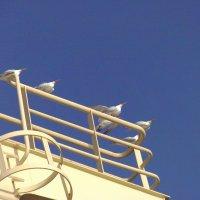 морские птицы :: juriy luskin