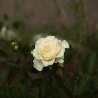 квітучий квітка :: МищЪя Бульбо